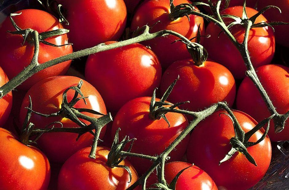 descripcion botanica del tomate