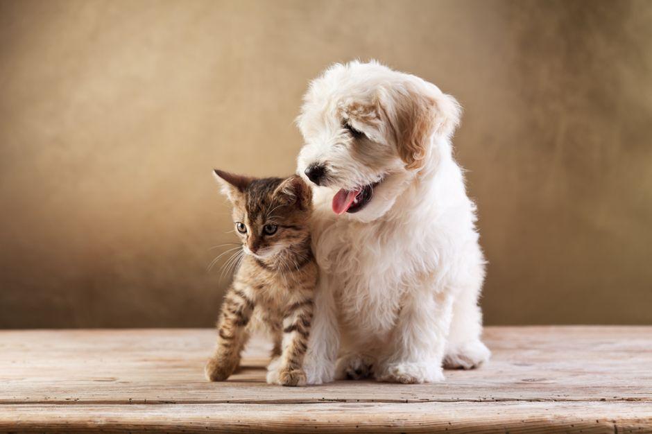 Tips para elegir a la mascota ideal