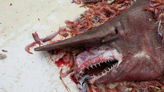 Causa asombro extraño tiburón en Florida
