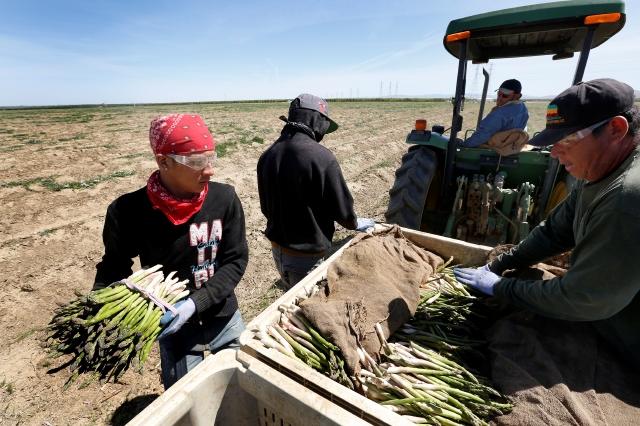 Granjeros aumentan los salarios para atraer trabajadores de campo a California