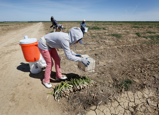 Escasez de campesinos pone en peligro cosechas de California