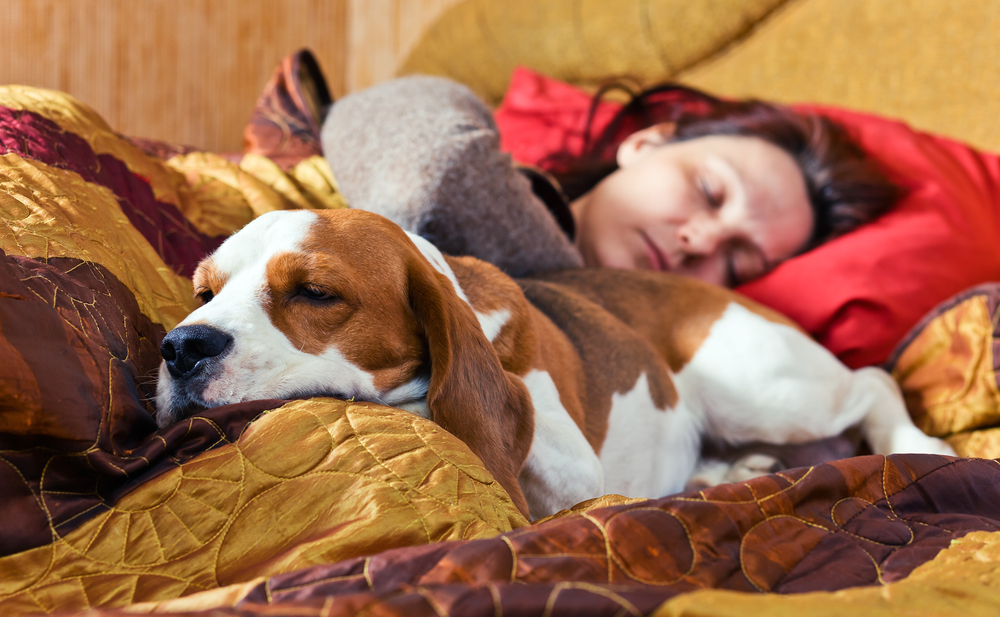 Pros y contras de dormir con tu mascota