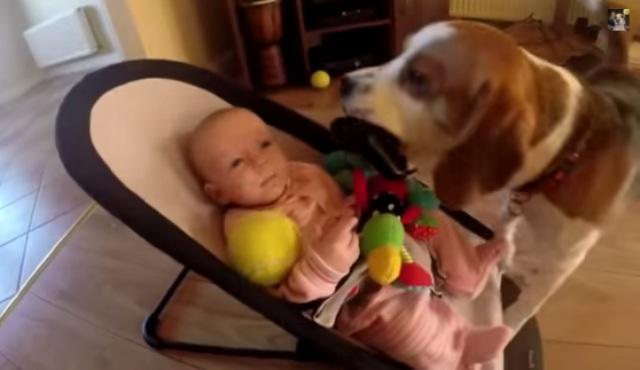 Perrito se disculpa cariñosamente con bebé por quitarle juguete