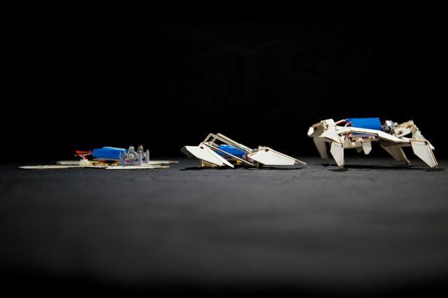 Tres posiciones de uno de los robots diseñados en el Instituto Wyss.