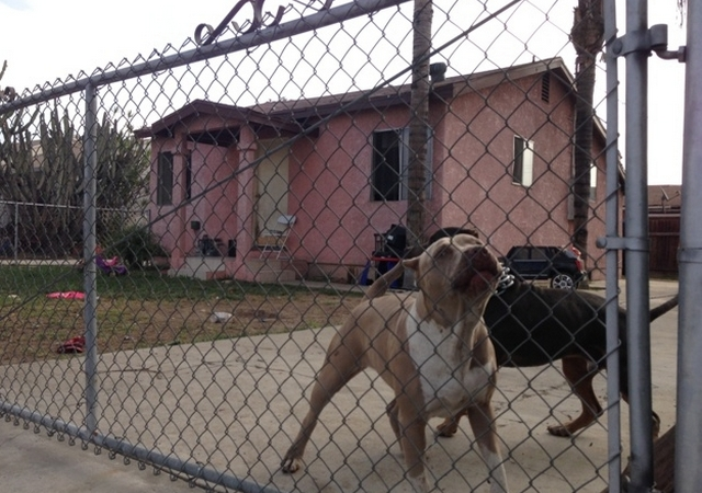 Prohíben usar cámaras de gas para sacrificar a perros y gatos en California