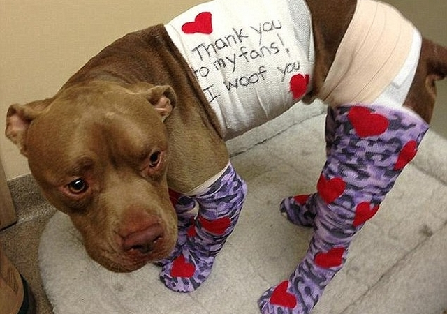 Sentencian a hombre por quemar vivo a perro pitbull