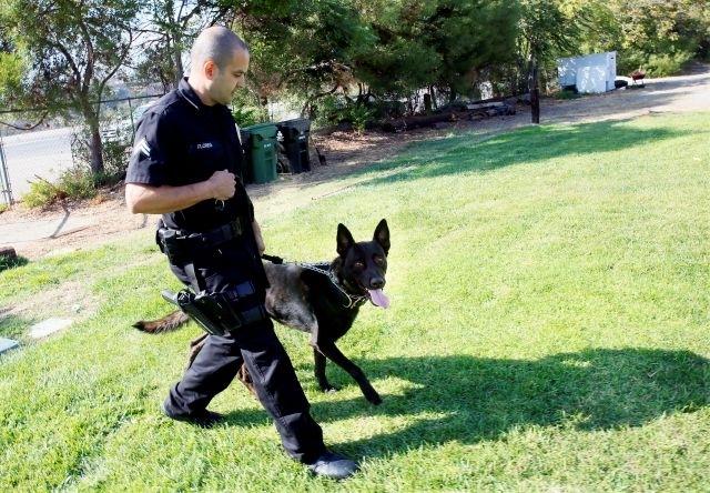 La unidad K-9 del LAPD: Perro que ladra no muerde