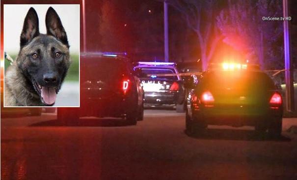 Dos muertos, un perro herido en tiroteos ocurridos en West Covina