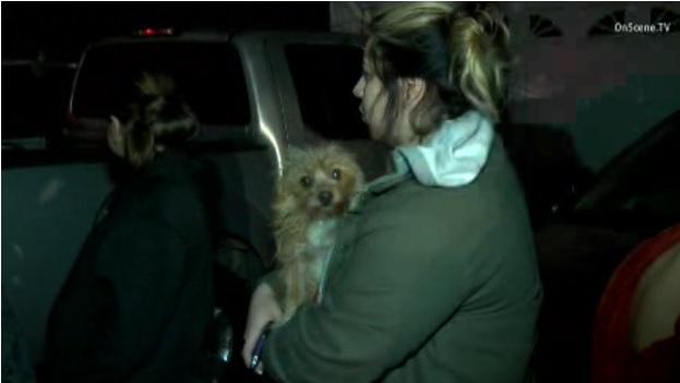 Perrita salva a su familia de un siniestro en Santa Ana