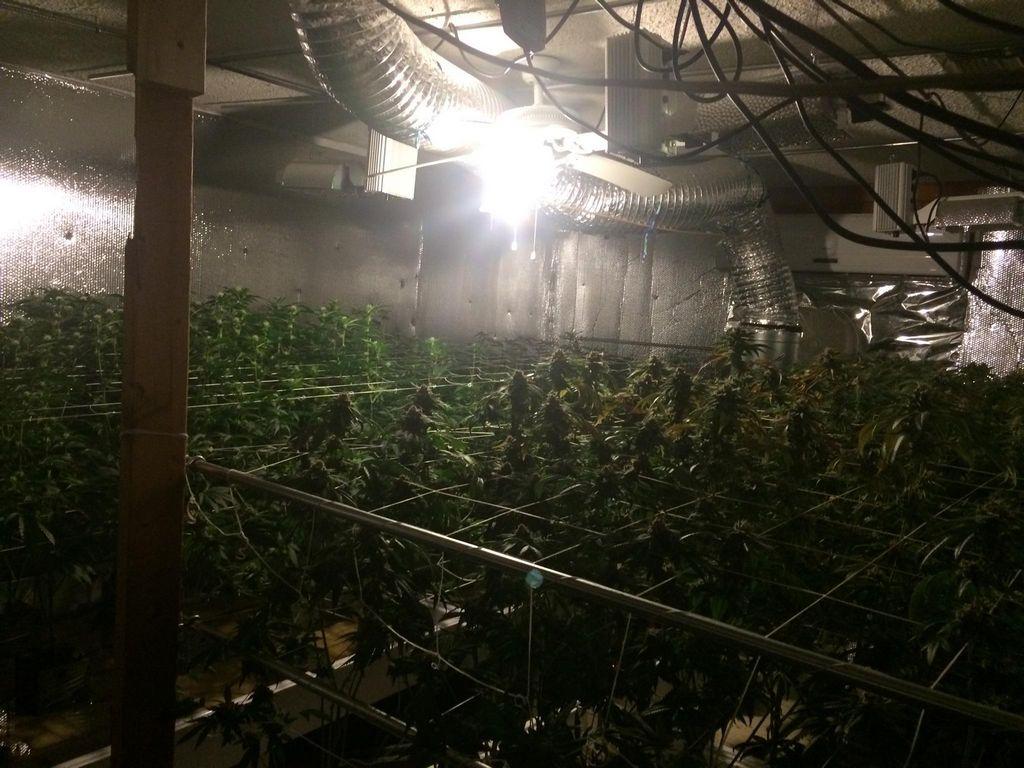 Mujer arrestada por sembrar marihuana en su casa de El Monte