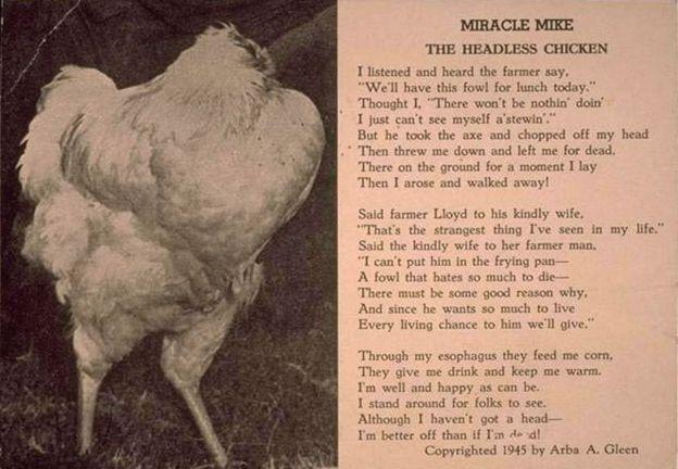 mike pollo