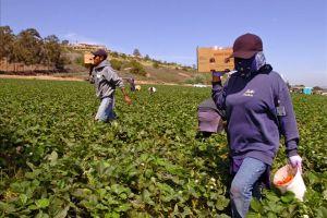 Aplauden multa millonaria a compañía por abuso sexual a campesinas mexicanas
