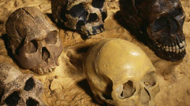 ¿Por qué somos la única especie humana que todavía está viva?