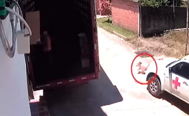 Perro es atropellado a propósito por camioneta de la Cruz Roja (VIDEO)