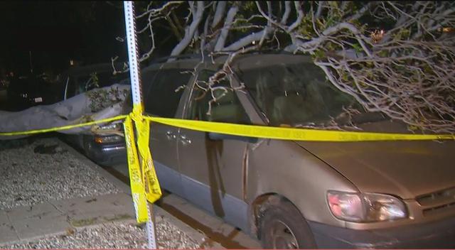 En West Los Ángeles un árbol cayó sobre varios vehículos estacionados en el bulevar Pico.