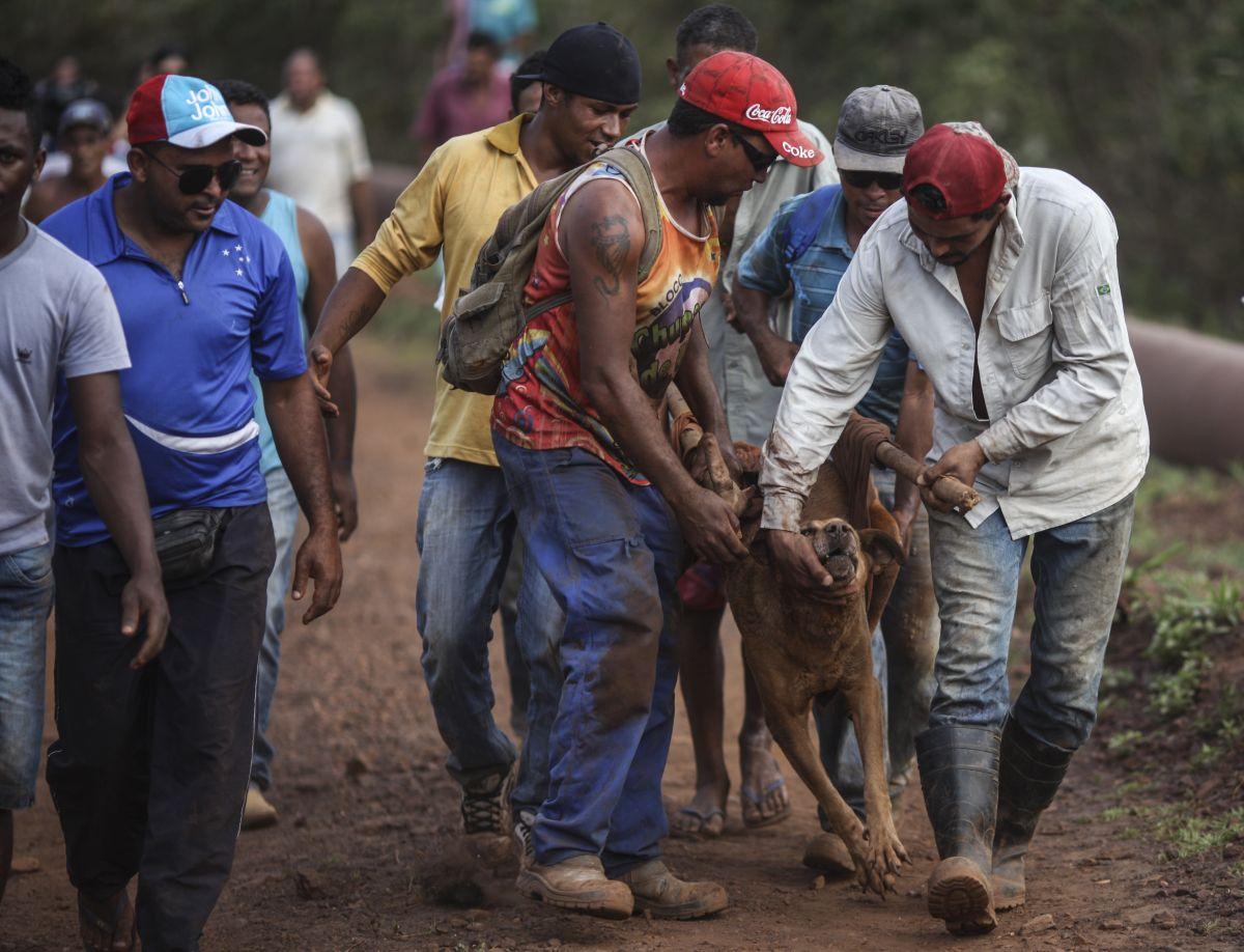Hombres rescatan un perro cubierto por lodo tras uno de los peores accidentes mineros del país.