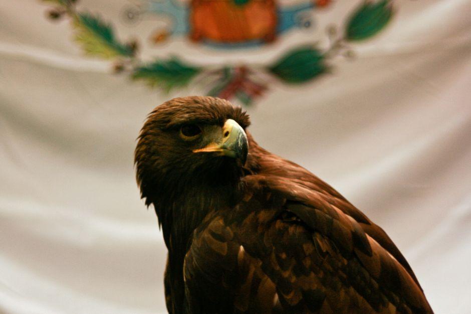 WaPost: Recorte a presupuesto y falta de voluntad política en México ponen en riesgo a especies