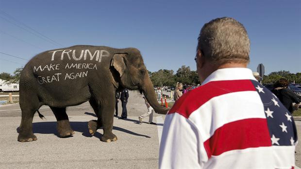 Un partidario de Donald Trump llevó un elefante con una consigna a favor del candidato, en Florida.