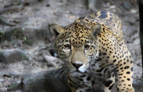 Medio millón de animales exóticos decomisados al crimen, políticos y pretenciosos en México