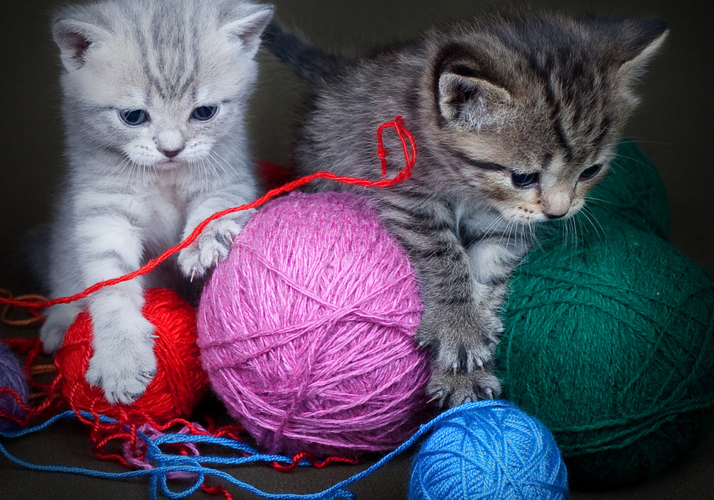 Me encontré otro lindo gatito… ¿será ilegal tener muchas mascotas en LA?