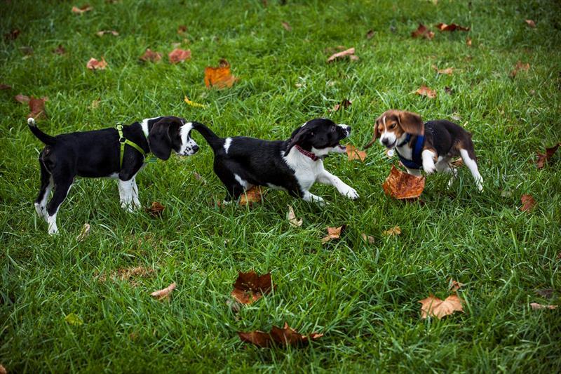 cachorros vitro