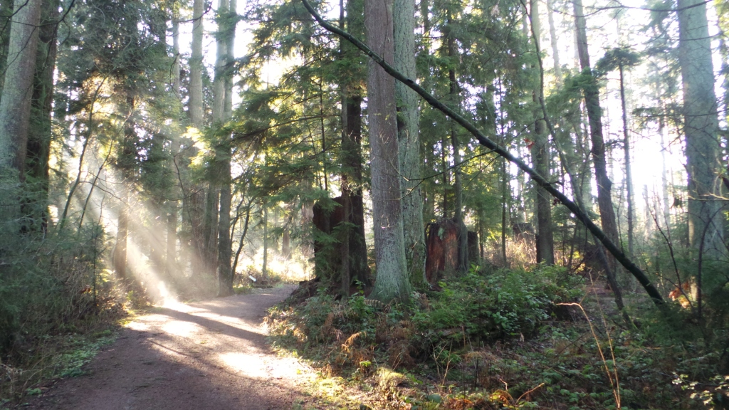 Stanley Park... donde los árboles casi te hablan.