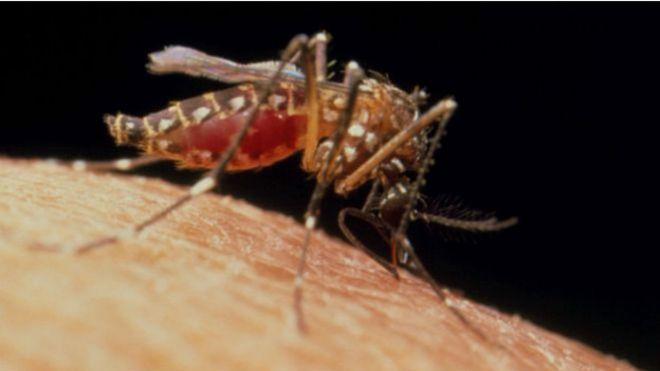 La mayoría de los mosquitos no molestan a los humanos.