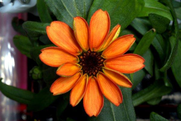 La primera flor que nace en el espacio