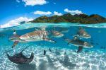 Las mejores fotos submarinas: magia subacuática y espectaculares naufragios
