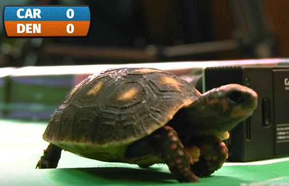 Estas pequeñas tortugas dieron como ganador a Carolina.