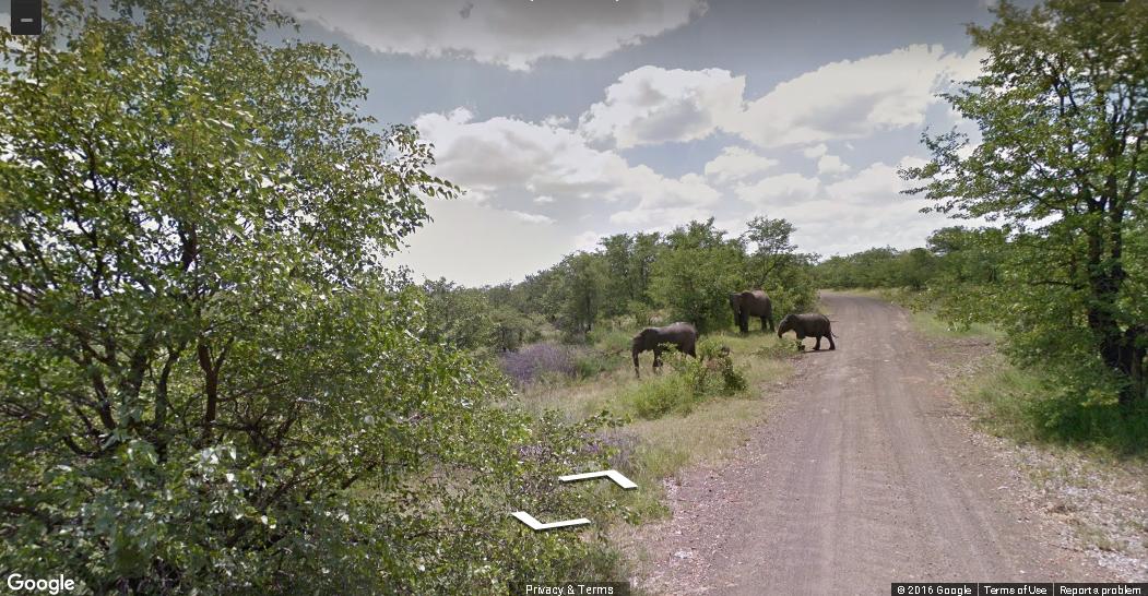 Google Street View te ofrece un safari en Sudáfrica
