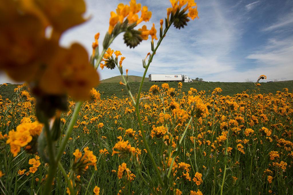"""EN FOTOS: Florece el desierto en California gracias a """"El Niño"""""""