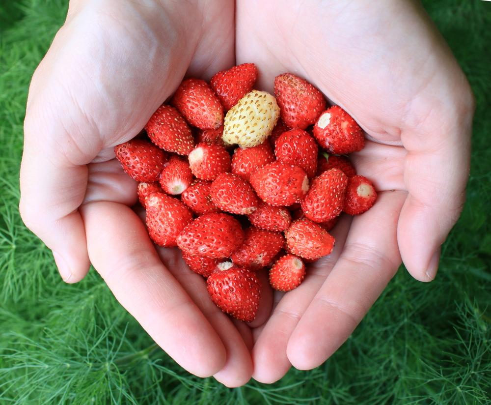 Los 5 vegetales más fáciles de cultivar en tu casa