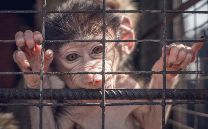 Más de 100 millones de animales usados en experimentos mueren cada año