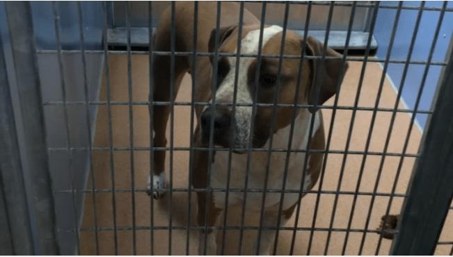 Muere recién nacido tras ser atacado por perro de la familia