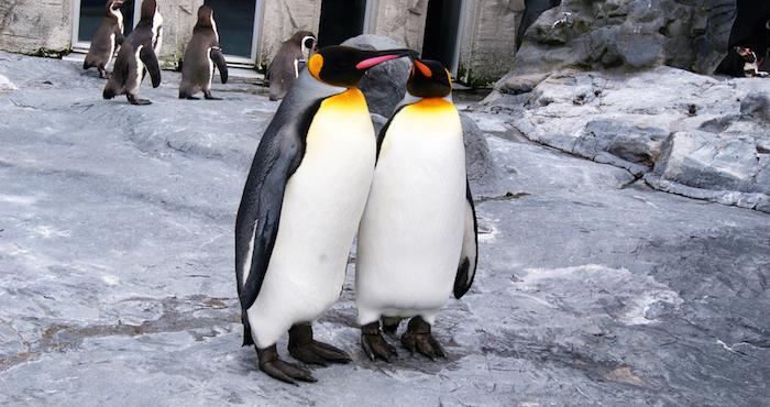 Encuentran a un pingüino muerto luego de ingerir una mascarilla N95 en Brasil
