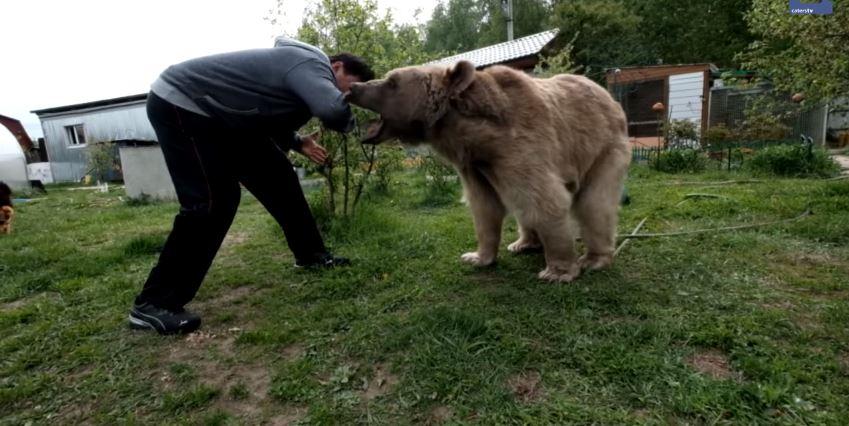 Video: La familia que tiene un oso de mascota (pero patea al perro)