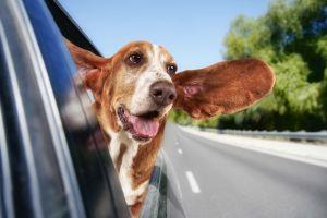 Si ves a una mascota encerrada en un coche, atrévete a estrellar la ventana
