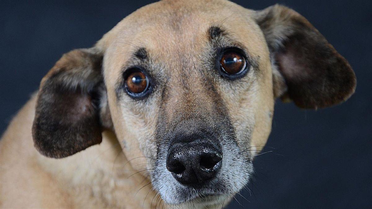 Fotos: La sabiduría de un perro callejero