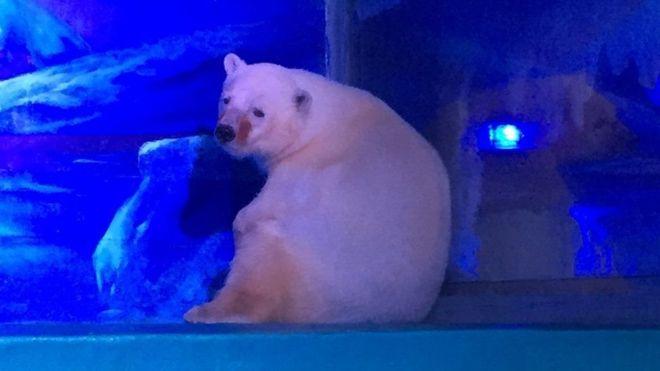 La indignante historia del oso polar que vive en un centro comercial