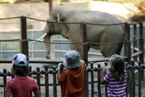 Activistas piden liberar al elefante Billy del Zoológico de Los Ángeles