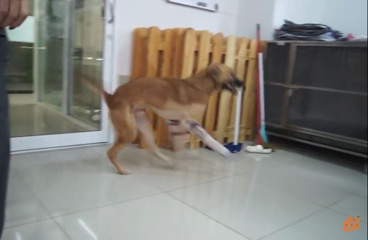 Video: Le cortaron las patas por morder unos zapatos, pero el final de la historia es feliz