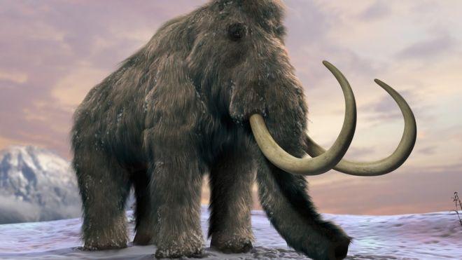 Así fueron los desesperantes últimos días de los mamuts