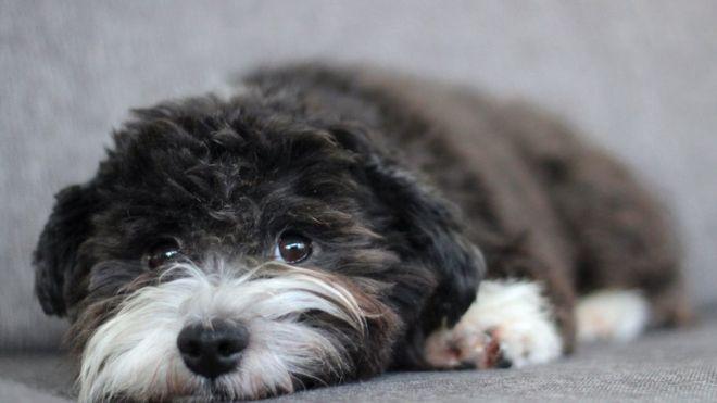 Santa Ana votará prohibir la presencia de mascotas dentro de Centro Cívico para desamparados