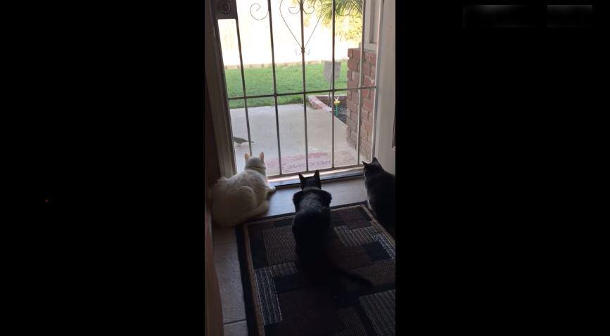 Video viral: La travesura que le hace este perro a un grupo de gatos es para reír