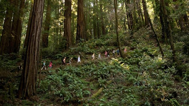 Actúa rápido y obtén un pase gratis para visitar parques en California