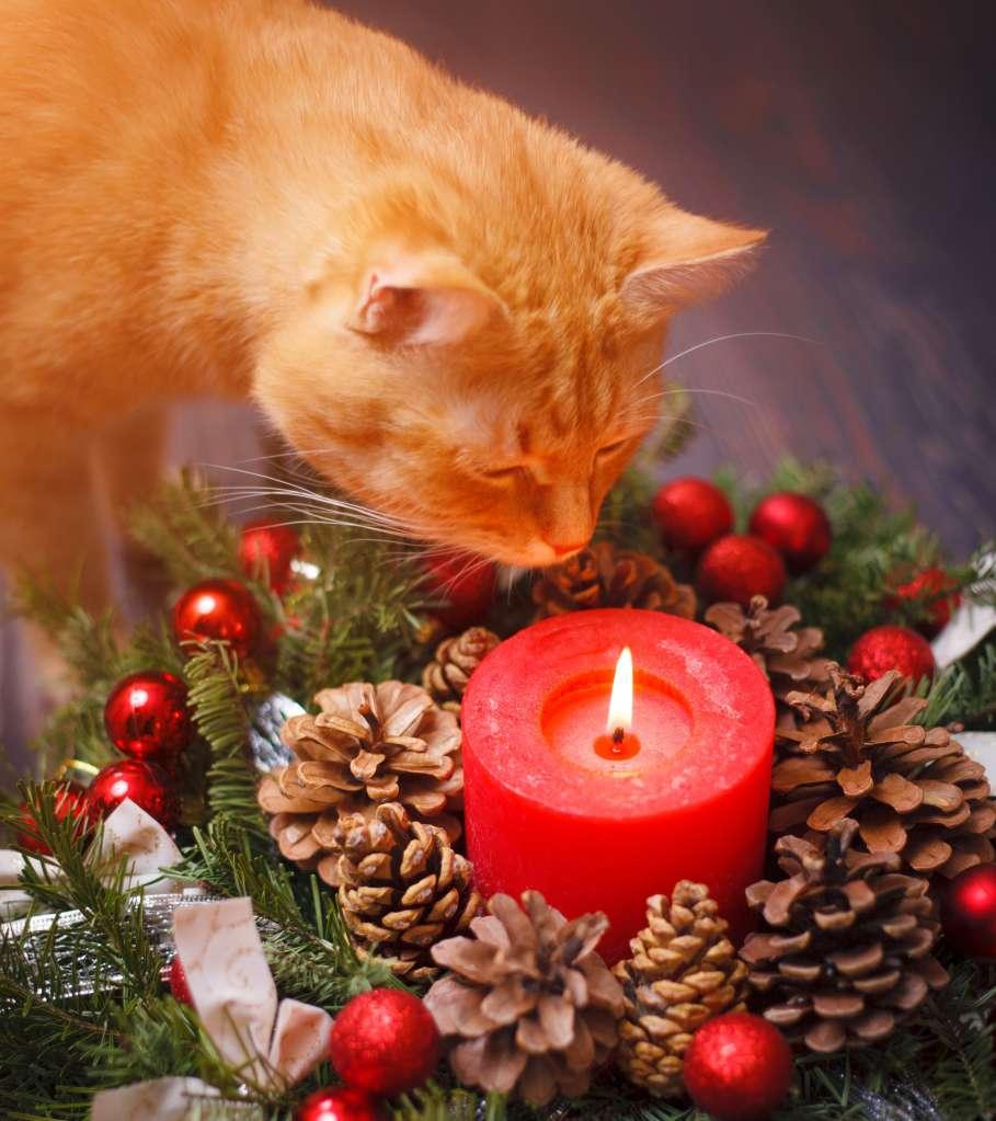 Las velas prendidas son un peligro potencial tanto para las mascotas, los niños pequeños y el hogar.