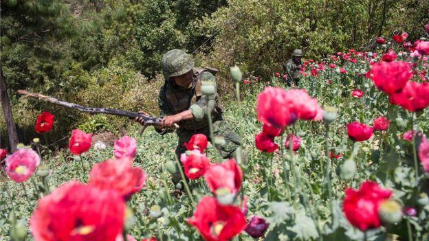 Guerrero es el estado con una de las mayores extensiones de cultivo de amapola en su zona montañosa, la cual es de difícil acceso para las autoridades. GETTY IMAGES
