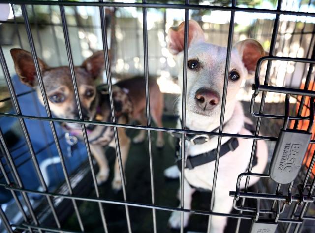 California prohibiría venta de mascotas que procedan de criaderos