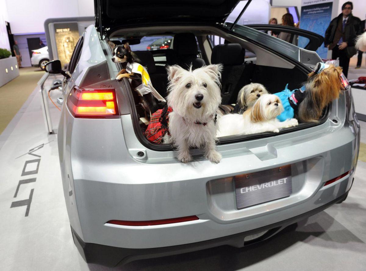 Perros a bordo